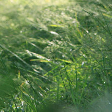 Pollenallergie Heuschnupfen – Akut-Therapie mit Eigenblut und Homöopathie